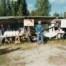 Mittmarken 1991